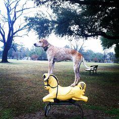 Maddie on a Rocking Horse.