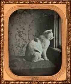 ca. 1850, [daguerreotype portrait of a cat at the window]  via the Nelson-Atkins Museum of Art, Photographic Collections