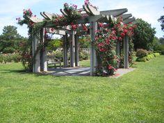 Rose Arbor, Norfolk Botanical Gardens.