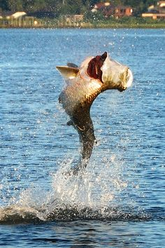 The wilds of st augustine florida on pinterest augustine for St augustine fishing spots