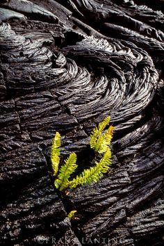 Hawaii Volcanoes National Park - Big Island, HI