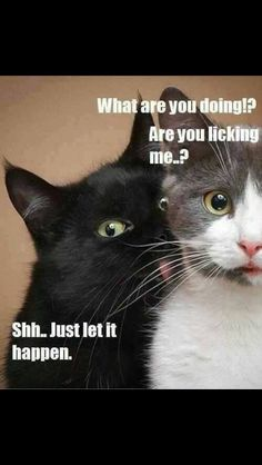 awkward moments, silly cats, creepers, funni, black cats, devon, facials, meme, boyfriends