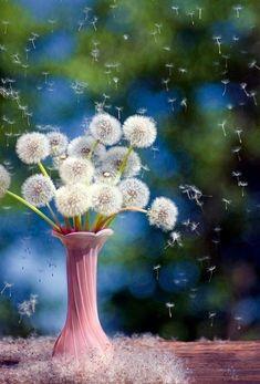 Dandelions! MY FAVORITE!