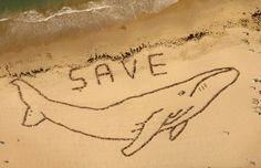save the whales beaches, november, save, australia, art, thought, sea, medium, whales