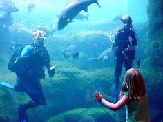 Dive show at the Flint RiverQuarium in Albany, GA.