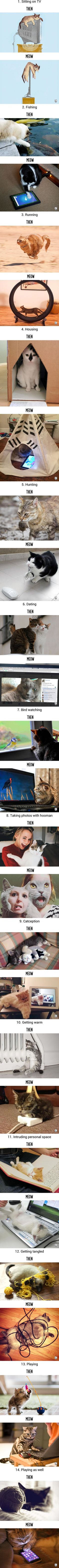 Then vs Meow: How Technology Has Changed Cats??? Lives (via 9gag)