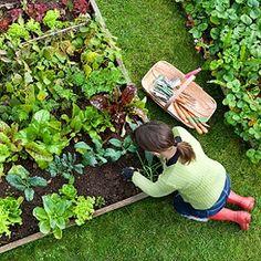 5 Steps to Starting a Vegetable Garden | Reader's Digest