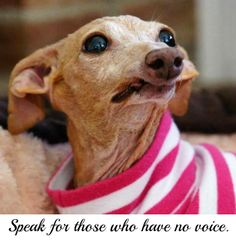 Olive asks you to speak for those who have no voice. #NMDR #nomorepuppymills