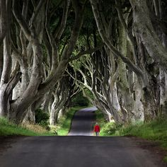 Little Red Riding Hood... Amazing trees!!