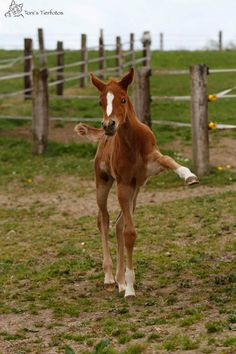 I see dressage in this youngsters future... Equine love