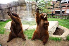Bear habitat. Baylor University.  Sic'em BEARS!