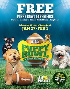 featur pet, animals, live puppi, pet adoption, bowl experi, experi featur, puppi bowl, bowls, bowl 2014