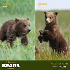 Are you more of a Scout or an Amber? #MeetTheCubs today in theatres and let us know.