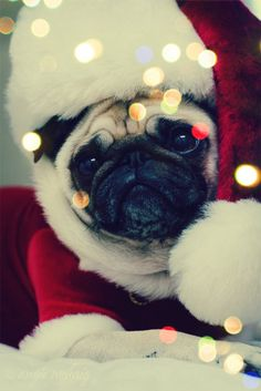 Pug love!!