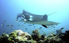 Would love to scuba dive in the Maldive Islands maldiv island