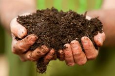 Soil testing and building better soil | Growing a Greener World soil testinghow, garden idea