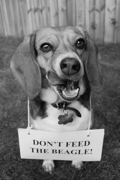 .Yeah, like you could keep the beagle from getting food.