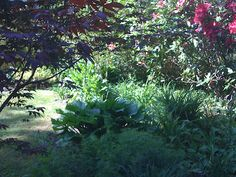 Back Yard Garden 2012