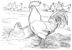 Free Rooster Pictures to Print | Rooster and hen laying eggs coloring page | Super Coloring