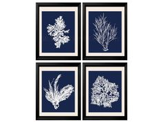 Coral Prints, White on Blue Sea Coral Print Set of FOUR 8x10, Coral Wall Art, Coral Print, Sealife print Blue 8x10 Prints on Etsy, $39.99