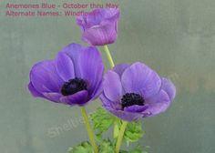 purple flowers and when in season