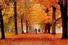 Fall in Ohio.