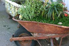 Rusted wheelbarrow...perfect combo