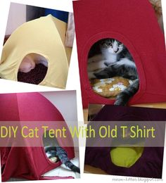 Craft Ideas make a Cat Tent with an old t-shirt so cute