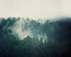 Landscape Photography Evergreen Trees in Fog in Oregon by EyePoetryPhotography