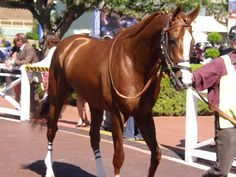 Position 5, and the favorite to win- California Chrome