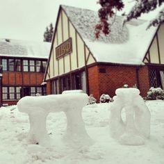 Pi Phi out of snow! #piphi #pibetaphi