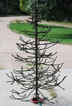turn a cheap fake tree into a big tree that looks like a feather tree. just use the scissors. Been wanting to do this since last year. Must thrift tree to cut.