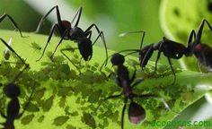 Cómo eliminar las hormigas de las plantas1 Como cultivar con macetas y no morir en el intento (Tercera parte)