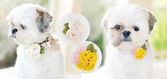 Coco Bean is stylin! Floral Collar Wraps by Sarah Dickerson of Chic Sprinkles | Modern Dog Magazine