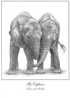 Elephant drawings |