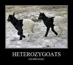 genetics jokes. awesome.