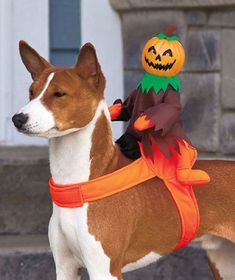 Scary Pumpkin Jack-O-Lantern Ride On Dog Halloween