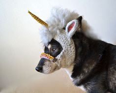 Hm… A Crocheted Unicorn Mask for a Dog