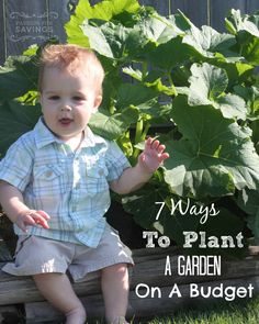 Want to plant a garden this summer? Check out ths 7 ways to plant a garden on a budget!
