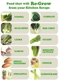 vegetables you can regrow