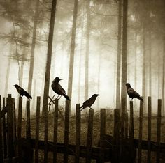 Once upon a midnight dreary, as I pondered - weak and weary - o'er many a quaint and curious volume of forgotten lore...