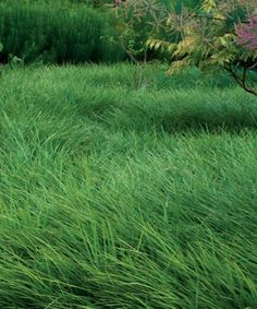 Low maintenance gardening by greengardens on pinterest for Low maintenance grass plants