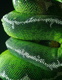 Incredible shades of green.