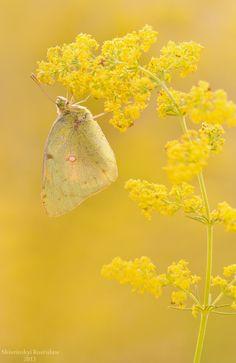 Yellow dreams by Rostislaw Shivrinskiy