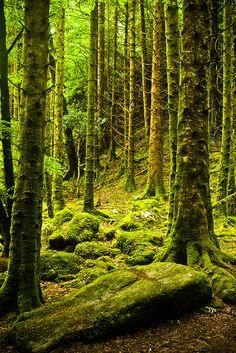 Forest of moss, Killarney National Park, Ireland www.facebook.com/loveswish