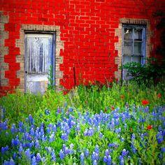 Texas wildflowers!!