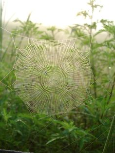 spider, web, dew, grass, green, morning