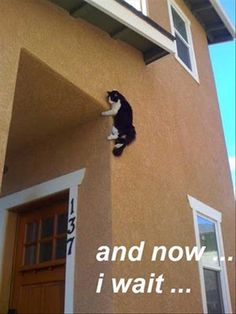 ninja cat wait