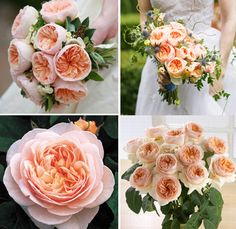 """Florist Susan Kelly of Three Sisters Custom Flowers and Events in Palo Alto submitted the stunner pictured in the upper right corner above—and I could not get over how lovely and unique those peach-colored blooms were. Susan told me those are David Austin Juliet roses, and a bit of online research revealed that David Austin is an English rose breeder known for creating a unique hybrid garden rose that he refers to as """"English roses."""""""