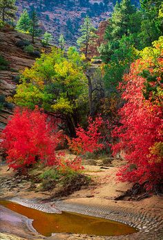 Zion National Park; photo by Inge Johnsson